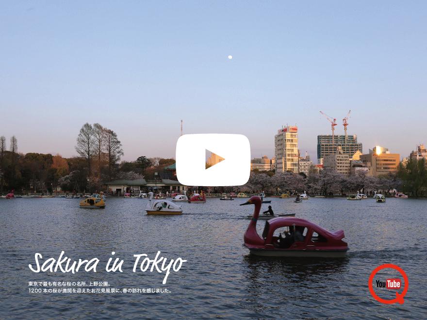 上野公園 東京の桜/Sakura in Tokyo